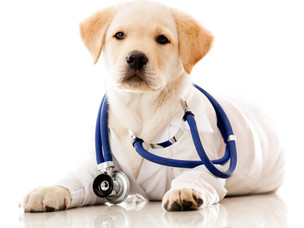Pups for Your Health: How Owning a Dog Improves Your Well-Being