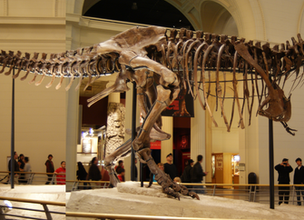 Sue the T-Rex Makes Way for World's Largest Discovered Dino