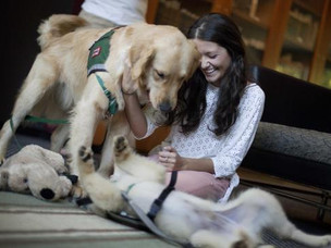 Therapy Dogs Help Reduce Stress before Finals