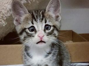 "Bum: the new kitty ""kraze"""