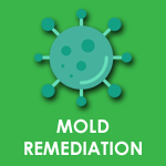 MOLD ICON.png