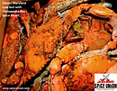 ChesBay.crab.boil_edited.png