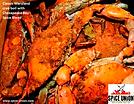 ChesBay.crab.boil.png