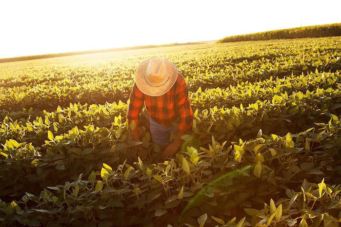 Travail agricole 1.jpg