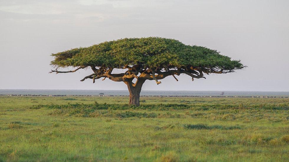 serengeti-national-park--tanzania--1055828960-5c4506fe46e0fb00013307e3.jpg