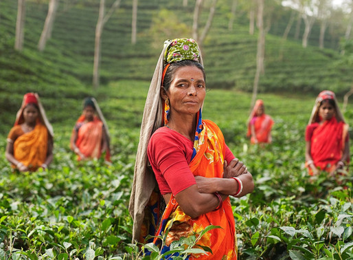 How empowering women can positively impact global warming ?