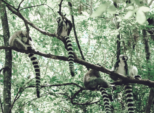 The endangered environment in Madagascar