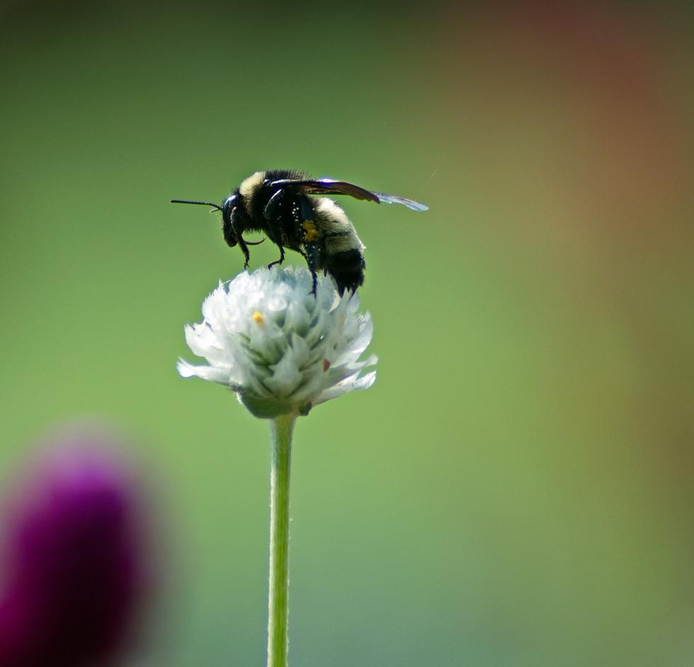 Pollen Stop