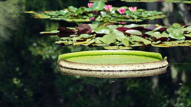 jul 26 huntsville botanical gardens island.jpg