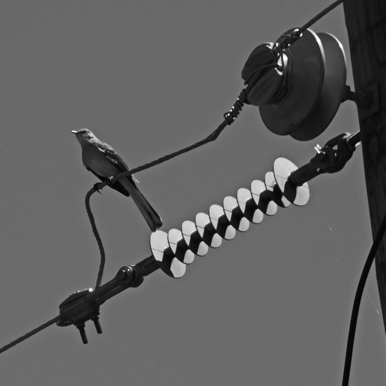 Transmitting Song
