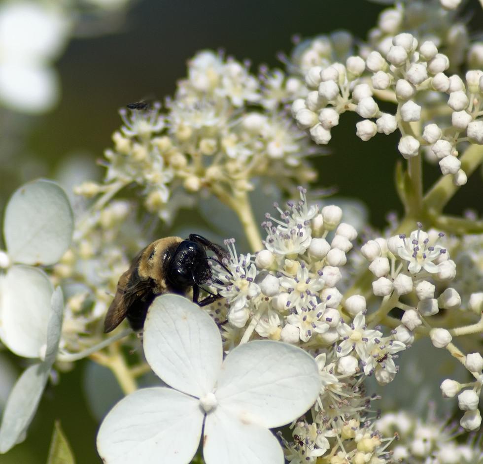 Mining for Pollen