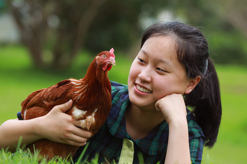 Show-Chickens-Student.jpg