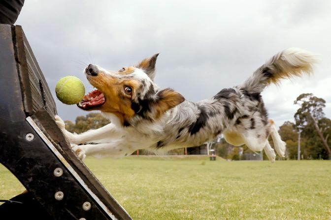 Thunderdogs-Dog-Ball.jpg