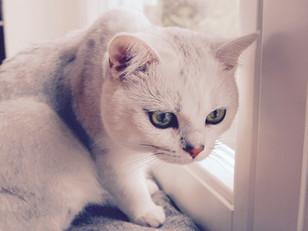 猫背は筋トレとストレッチだけではなおらない?!