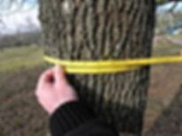 300px-Using_diameter_tape.jpg
