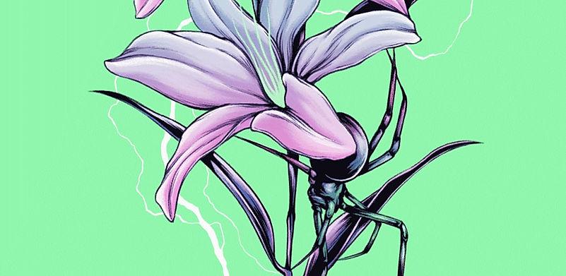 SpiderFlower.jpg