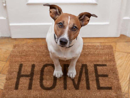 Fun Things To Do with Your Pet While Social Distancing