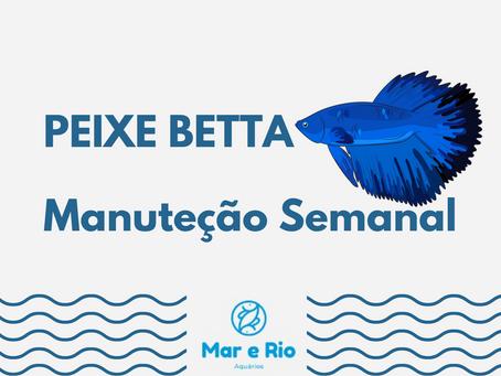 Peixe Betta- Manutenção Semanal
