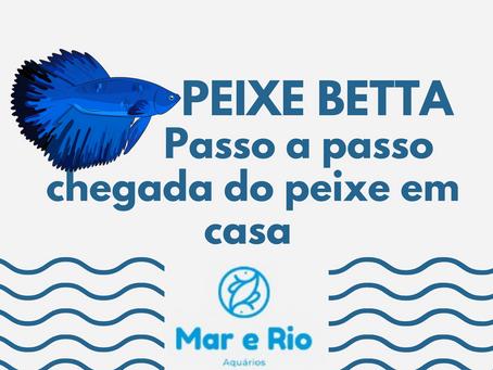 Peixe Betta - Passo a passo chegada do peixe em casa