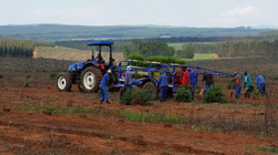 Tree planting operation