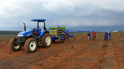 Tree planting - Piet Retief South Af