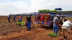 High Pressure Water planting