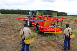 GP3000 Gel planting trailer
