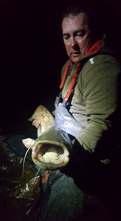 Rob Williams Cat Fish