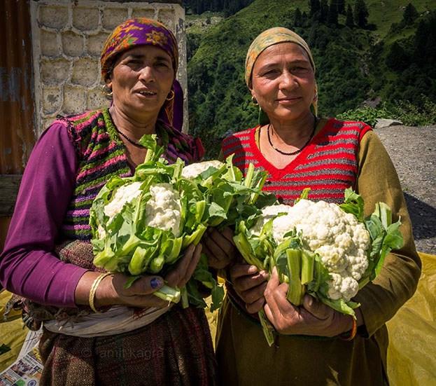 women with cauliflower in barot valley in himachal pradesh