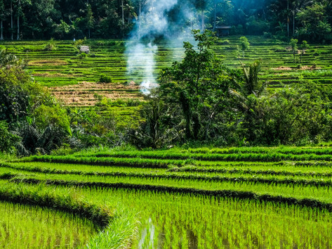 bali rice field.jpg