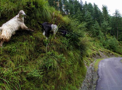 Barot  Valley- visual Paradise in Himachal Pradesh
