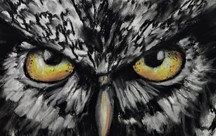 Owl eyes by Luna Smith