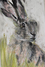 Hare sketch in pastels by Luna Smith