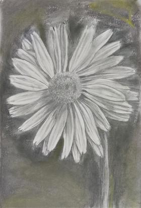 Daisy sketch