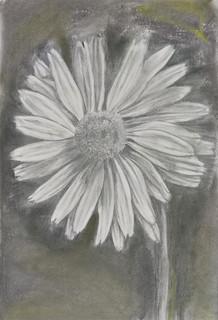 Daisy sketch by Luna Smith.jpg