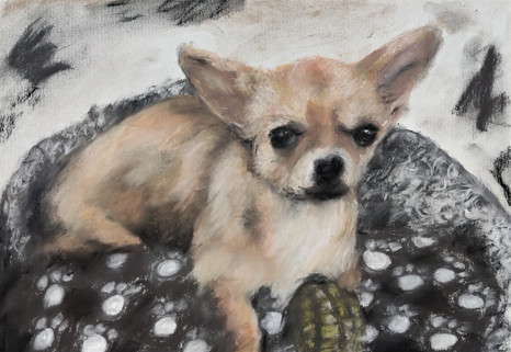 Biscuit - a cute chihuahua drawing by Lu