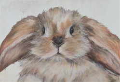 Bunny by Luna Smith