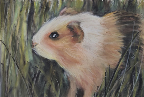 Guinea pig pastel drawing by Luna Smith