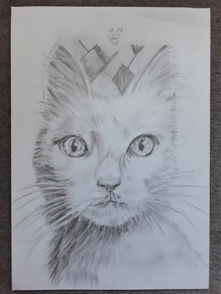 Cat by Luna Smith