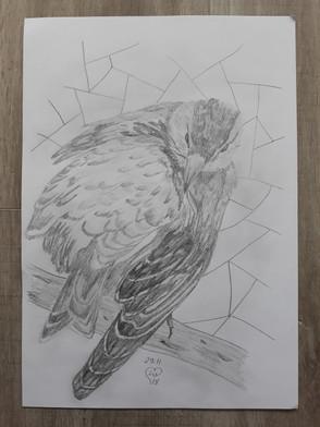 Bird by Luna Smith