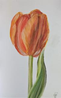 Tulip by Luna Smith.jpg