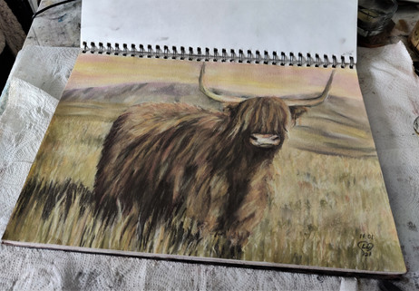 Scottish cow, Highland Coo by Luna Smith