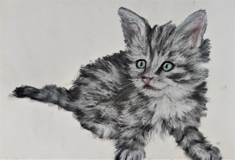 Kitten - pastel drawing by Luna Smith