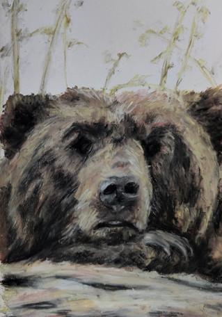 Bear drawing by Luna Smith