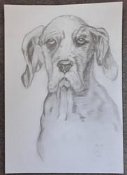 Dog by Luna Smith
