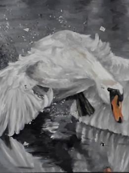 Swan by Luna Smith.