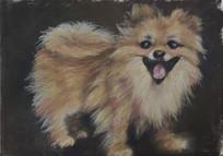Pomeranian by Luna Smith