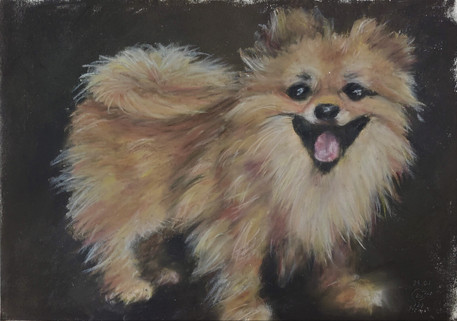 Pomeranian by Luna Smith