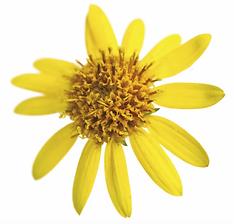Árnica, Crema Humectante, Relajante y Antioxidante Biowell