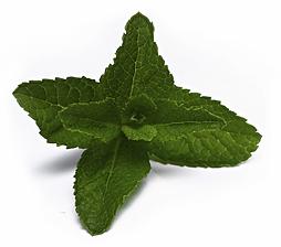Mentol, Crema Humectante, Relajante y Antioxidante Biowell
